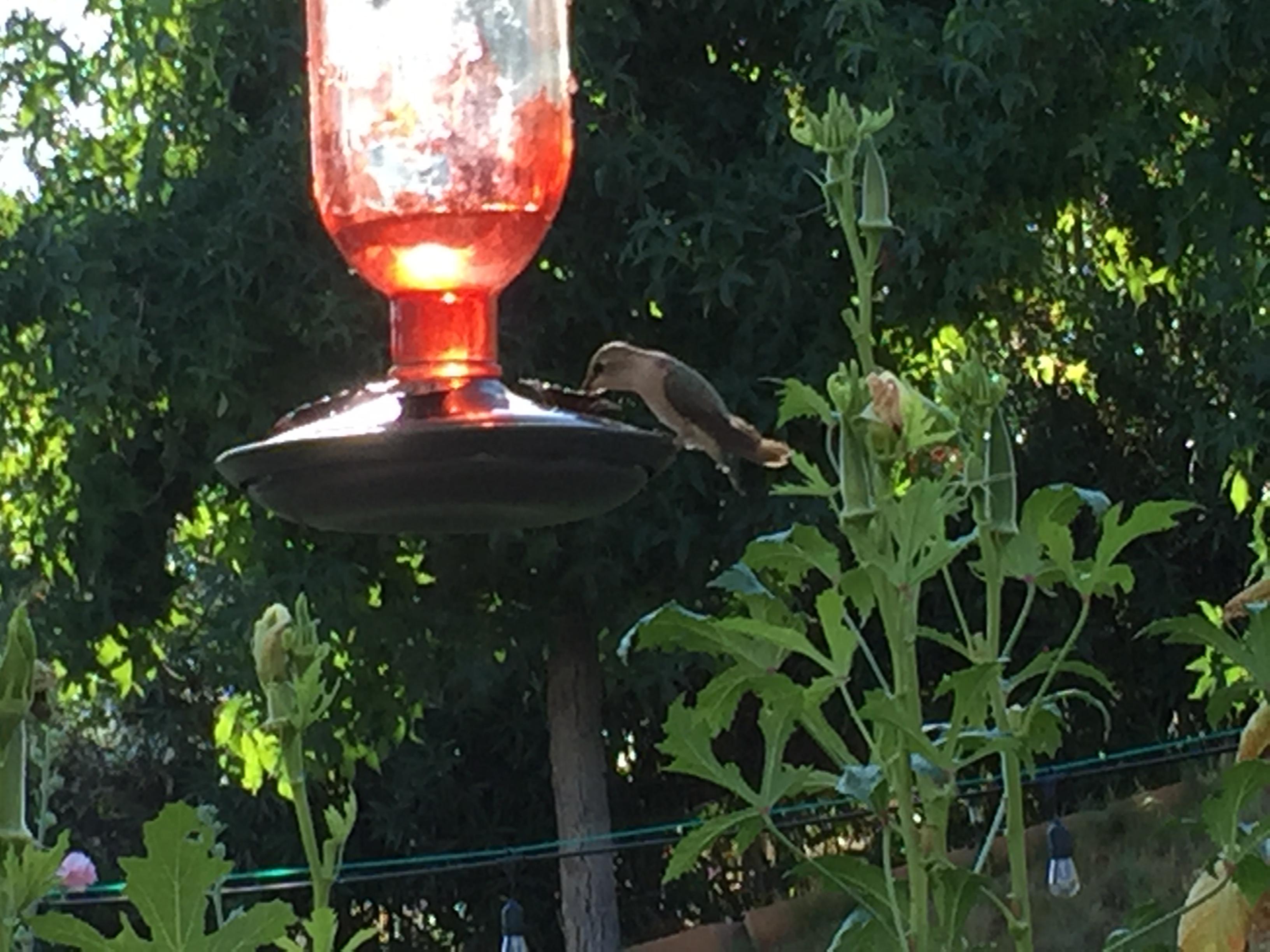 Hummingbird - www.turnaroundat50.com
