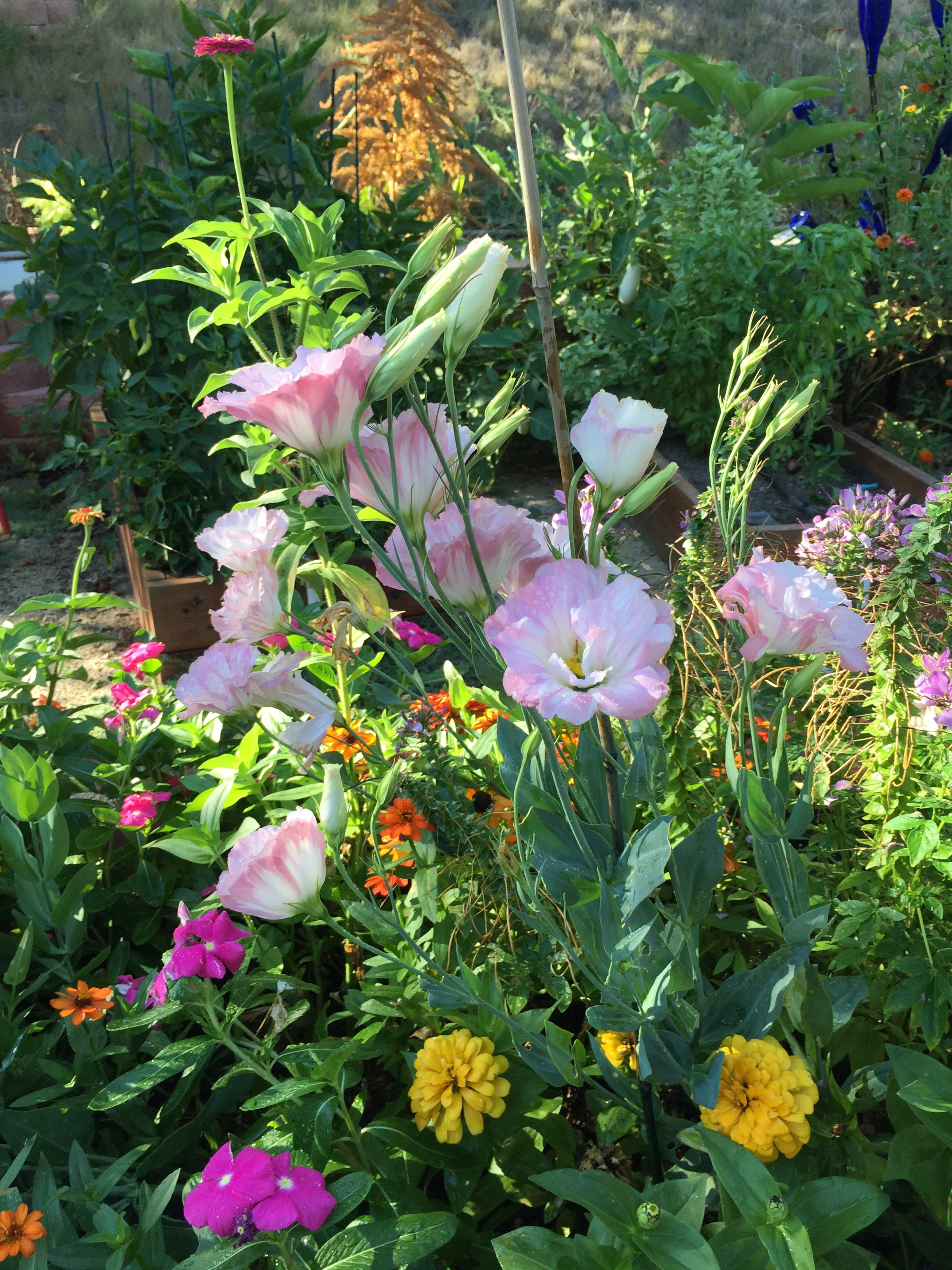 Flower garden - www.turnaroundat50.com