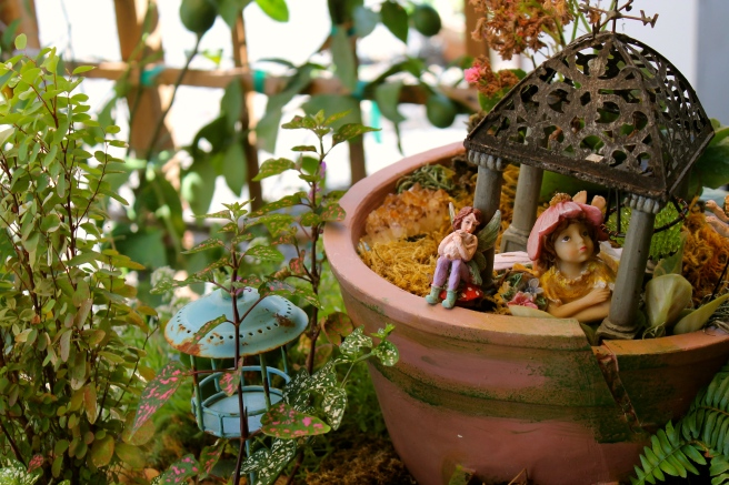 Fairy Garden - Myrtle Creek